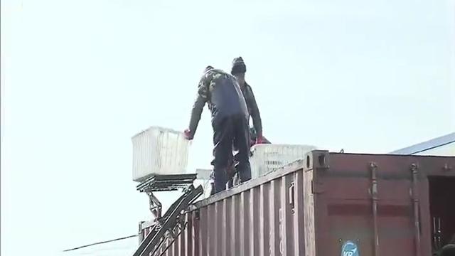 沈阳海关4小时完成淡水鱼出口签证工作