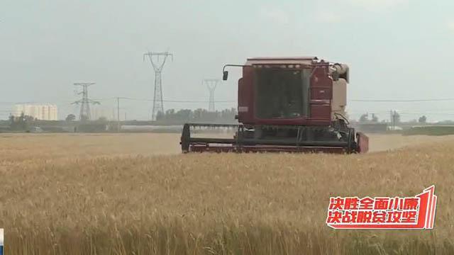"""苏家屯区:小麦丰收 绘出最美""""金色画卷"""""""