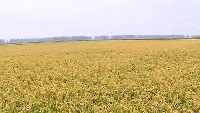法库县:转变生产方式 实现增产增收