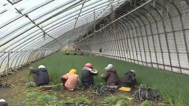 """""""供销惠农·双减双增""""试验示范项目:保护生态环境 助力农民增收"""